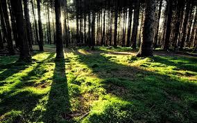 trees wind 2